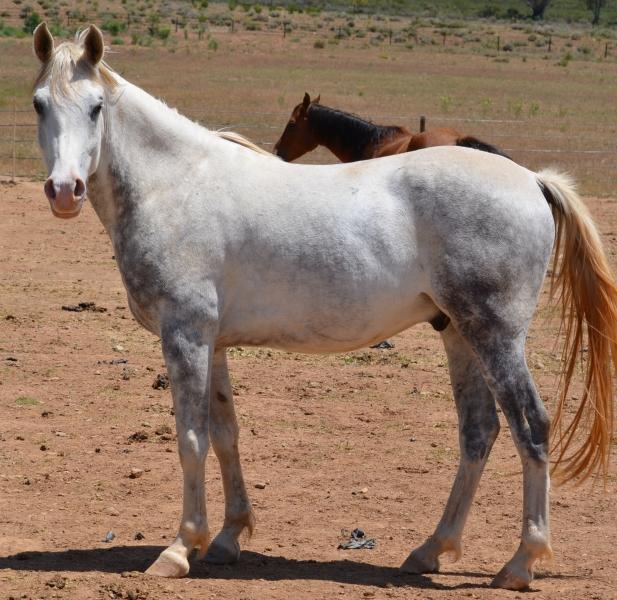 Horse 3 111817