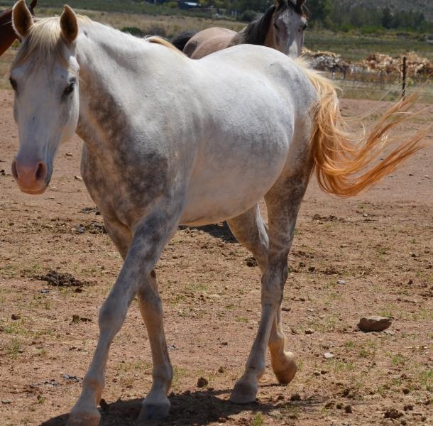 Horse 8 111817