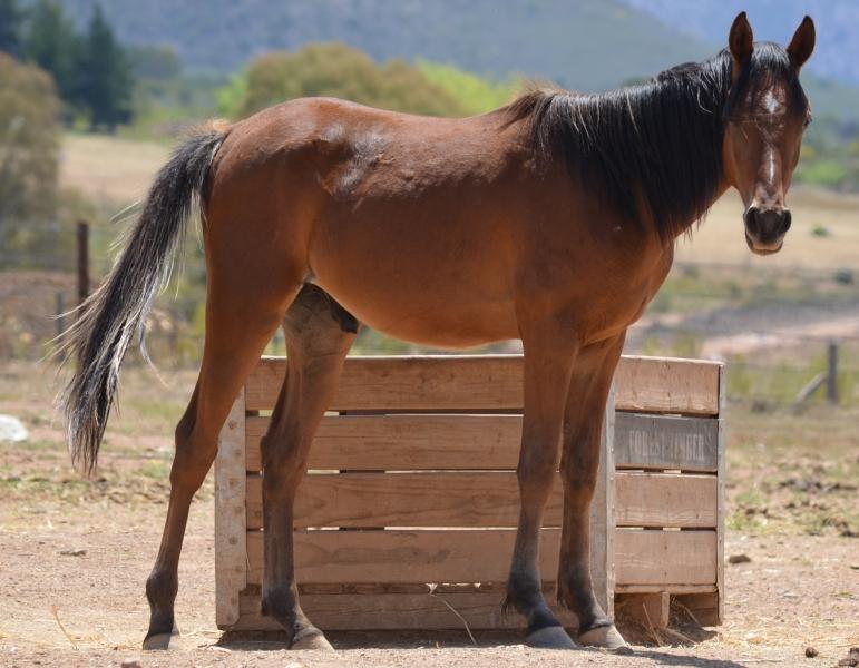 Horse 9 111817