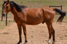 Horse 4 111817