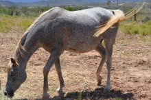 Horse 1 111817