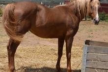Horse 10 111817