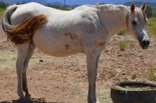 Horse 2 111817