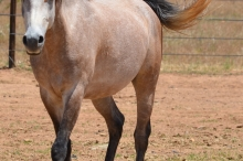 Horse 5 111817