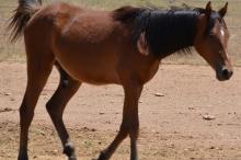 Horse 6 111817