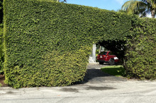 Hedges-030321