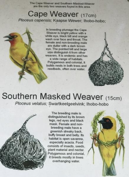 Cape-Weaver-121719